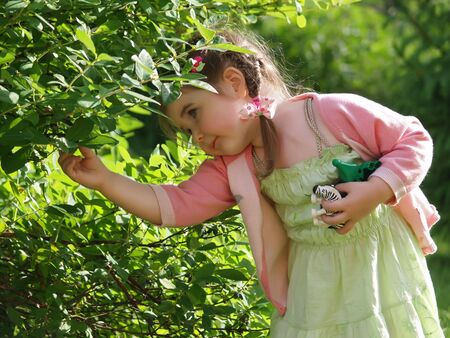 Little girl collecting berries from a bush         Stock Photo