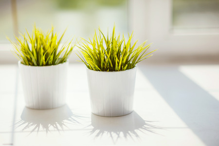 Green grass in white pots on the windowsill, flat decoration