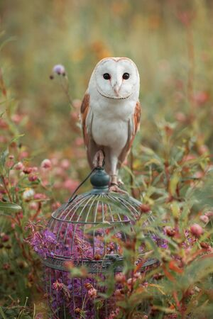 Nice owl sitting on the vintage cage