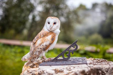 日時計の上に座って素晴らしいフクロウ 写真素材