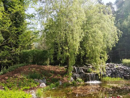 A beautiful scenary with green trees and small water fall