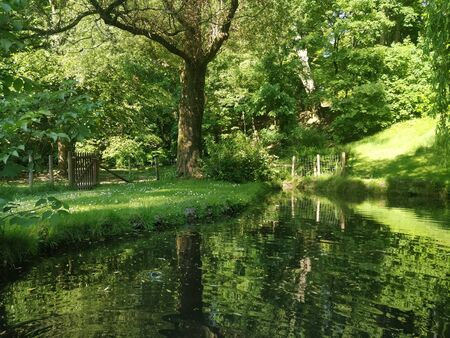 A beautiful green scenary with tree beside a pond