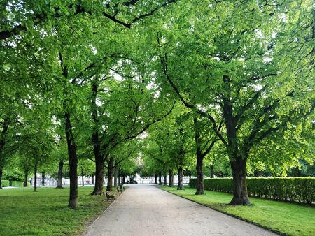 A beautiful park with green trees on both the sides 写真素材