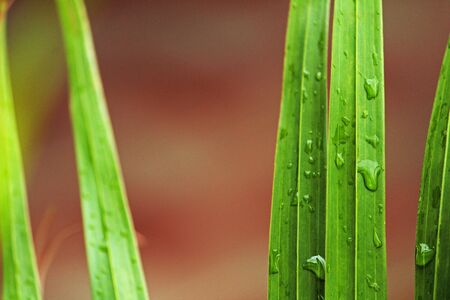 Water droplets on a plant 스톡 콘텐츠