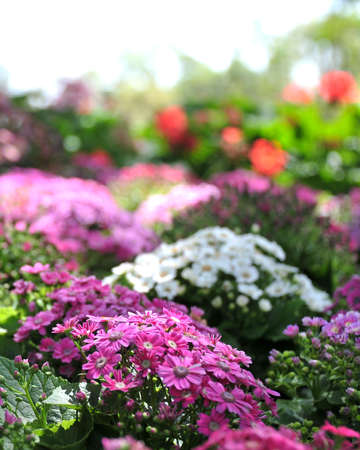 in bloom: flowers bloom in the garden Stock Photo