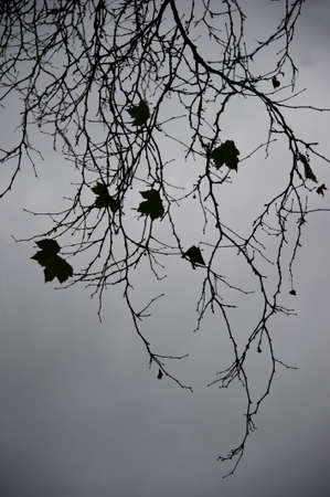 quite time: maple branches in forest Stock Photo