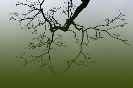 filtered: leafless tree branch on gradient filtered green background. Stock Photo