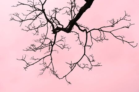disperse: dired tree branch on clouds red background.