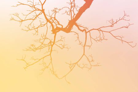 disperse: Leafless tree branch,earth tones background. Stock Photo