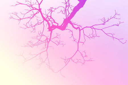 disperse: Leafless tree branch, gradient filtered background.