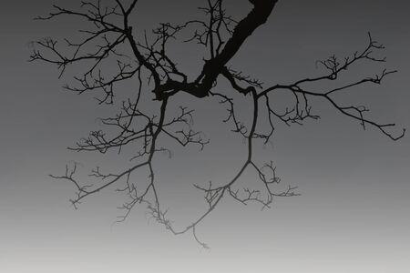 leafless: leafless tree branch on horror dark shade. Stock Photo