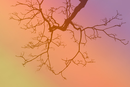 filtered: leafless tree branch on colorful gradient filtered shade.