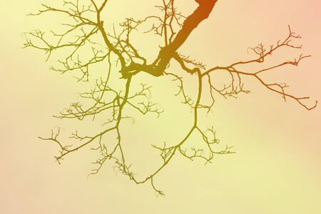 leafless: Leafless tree branch, earth tones background. Stock Photo