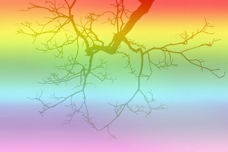 leafless: leafless tree branch on gradient filtered rainbow colors background.