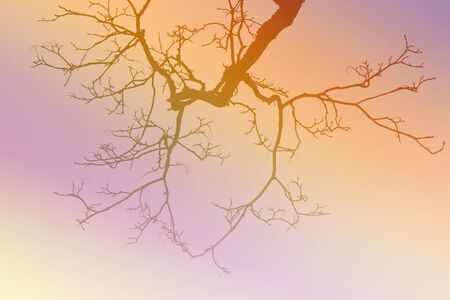 leafless: Leafless tree branch, vintage colors  gradient filtered background. Stock Photo