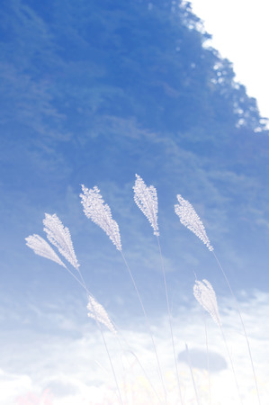filtered: Natural Grass flowers  in blue shade gradient filtered.