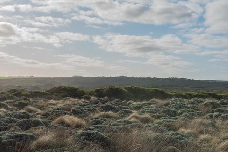 scrub grass: Outback Australian bush in national park in great ocean road tour, Victoria, Australia.