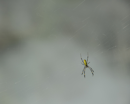 web footed: Spider on web