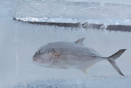 thicken: Frozen Tuna fish in a block of ice