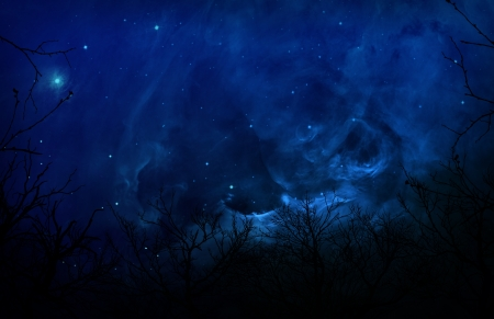 night scene: Looking up into the night sky through silhouetted trees.  Stock Photo