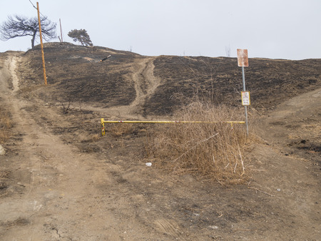 A charred and severely damaged hilltop in public park.