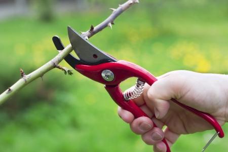 prořezávání větev s zahradnické nůžky