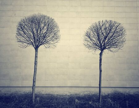 Bare trees against a wall Stock Photo
