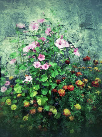 Flowers growing at grunge wall Stock Photo