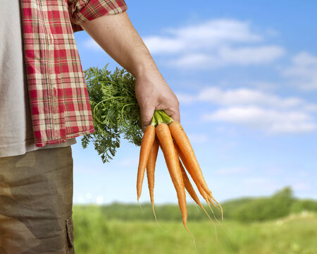 carrots in farmer hand