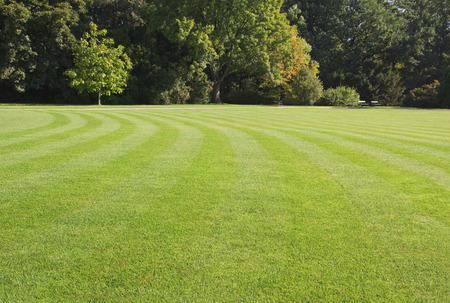 green, striped lawn in the park Stock Photo