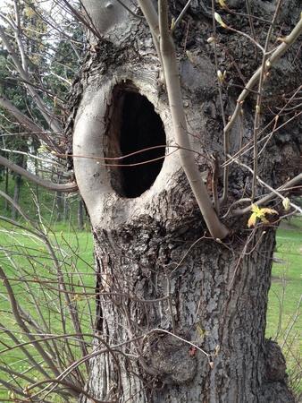 hollow tree: Tree hollow