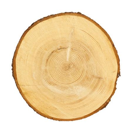 boomstam doorsnede, geïsoleerd op wit, uitknippad opgenomen
