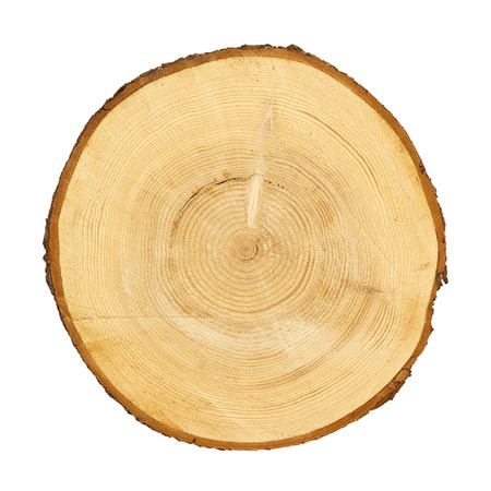 log on: tree trunk cross section, isolated on white, clipping path included