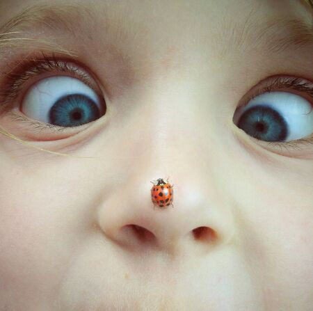 Lieveheersbeestje op de neus Stockfoto