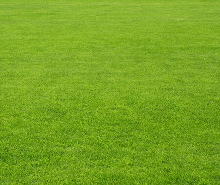 green lawn background Standard-Bild