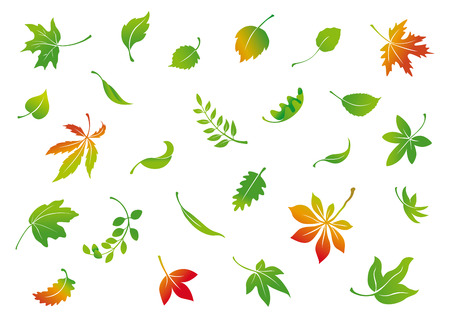 set van vector herfstbladeren Stock Illustratie