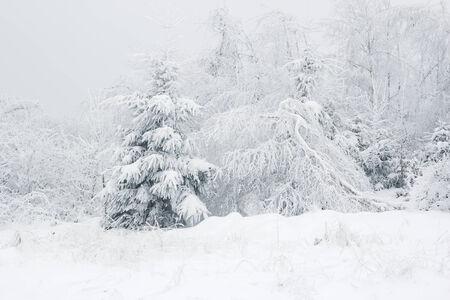 wintry: frosty winter landscape Stock Photo