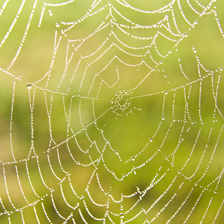 dewdrops: Dewdrops on a spider web