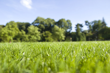 공원에서 잔디의 근접 촬영