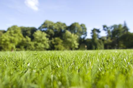 close-up van het gras in het park