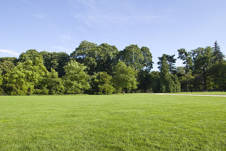 grass field: park landscape Stock Photo