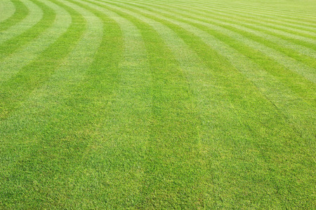 cut grass: mowed lawn background