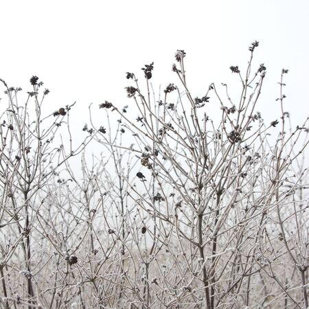winter field: Frozen plants, selective focus Stock Photo