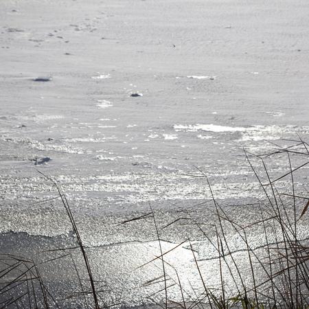 canne: canne contro lago ghiacciato