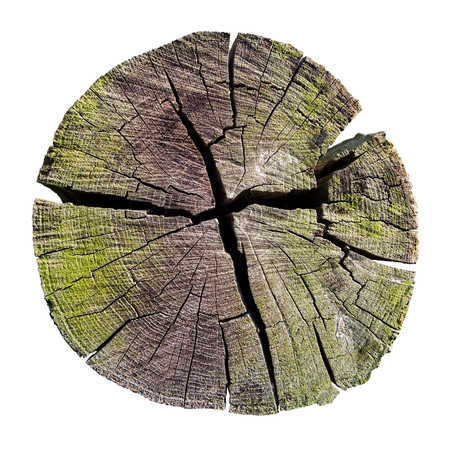 weathered tree trunk cross section, isolated on white, clipping path included Stock Photo