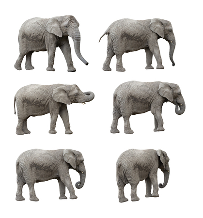 elephant set, clipping paths included Stock Photo