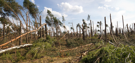 storm damage: forest storm damage in Poland Stock Photo