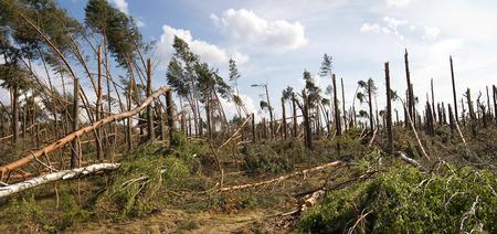 forest storm damage in Poland Standard-Bild