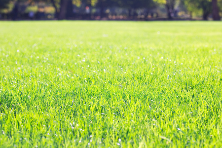 ground: sunny lawn in the park