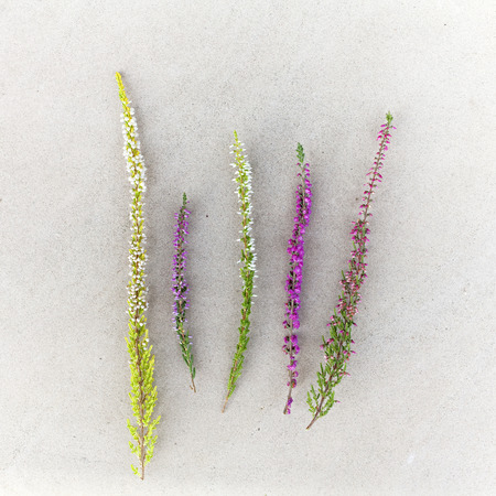 various kinds of heather on stone background